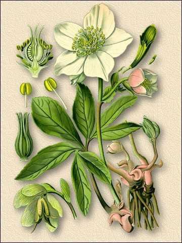 Цветки душистые