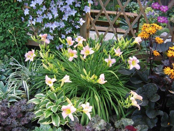 Цветки чисто-белые, с зеленоватым центром