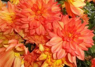 Цветки разнообразной окраски