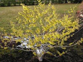 Многочисленные ярко-желтые цветки
