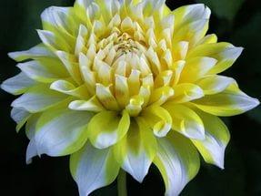 Цветки белые и желтые