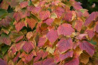 Ветви покрыты яркими красными и белыми полосами