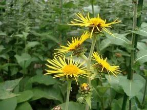 Яркие желтые краевые цветки