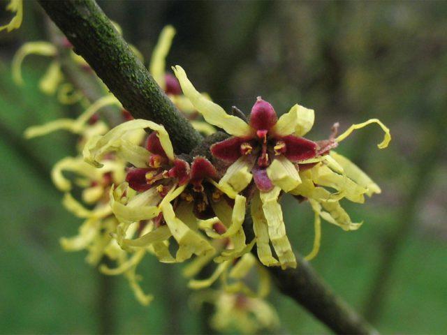 Закрученные желтые цветки