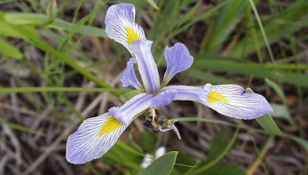 Лилово-синие цветки