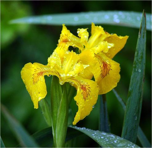 Ярко-желтые цветки