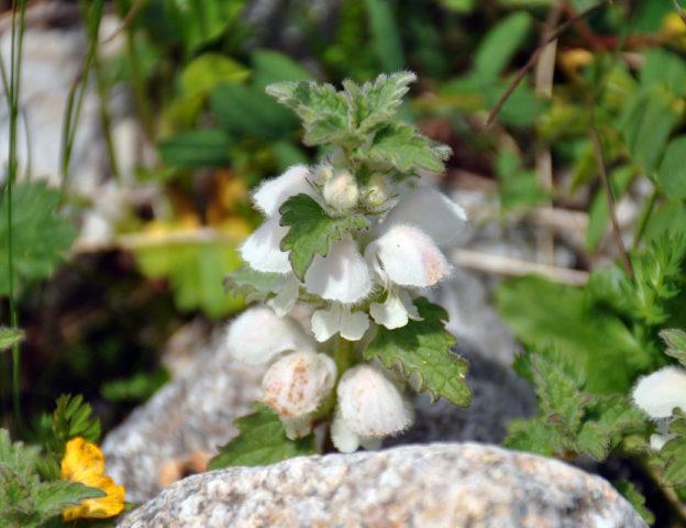 Соцветия кремовых цветков