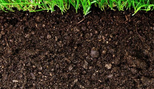 Какая почва в саду?