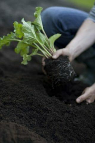 Почва как часть окружающей среды
