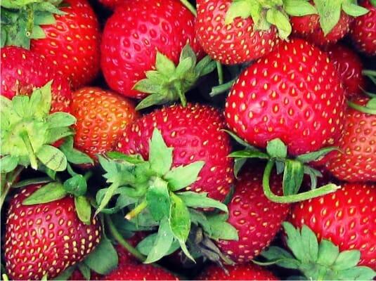Садовые деликатесы растений