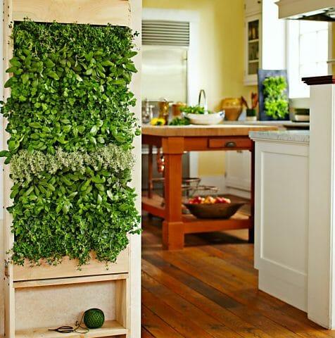 Кухонный сад