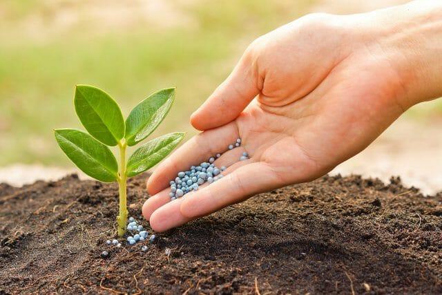 Удобрение применяют при подготовке почвы к посадке растений