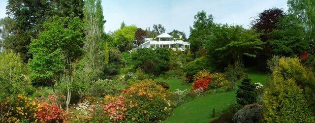 Кленовый сад
