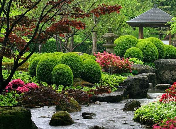 Выбор растений для японского сада