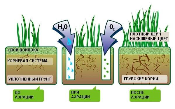 Пожелтение газона! Причины и решения проблем