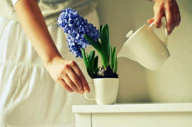 Полив комнатных растений