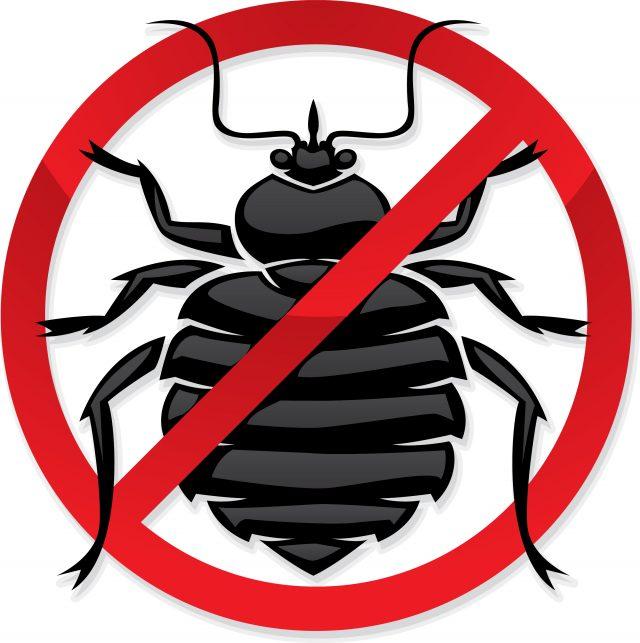 Завелись насекомые дома