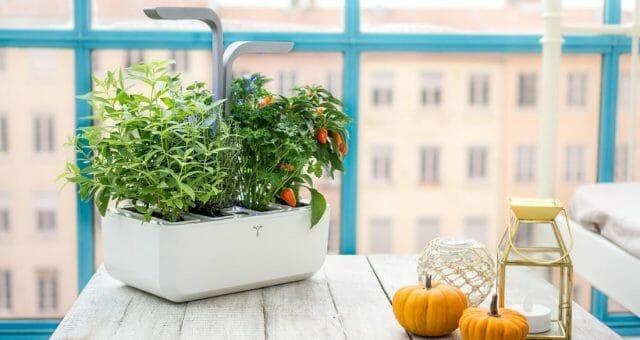 Умные приборы для домашнего огорода