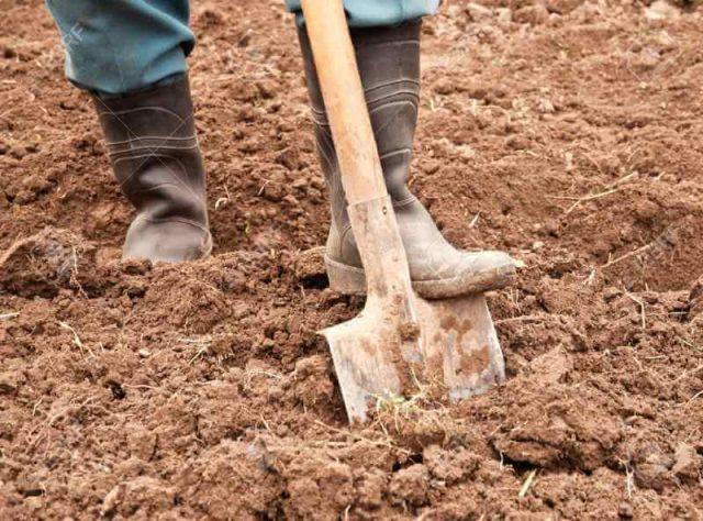 Правила копания земли, когда и как перекапывать землю на даче