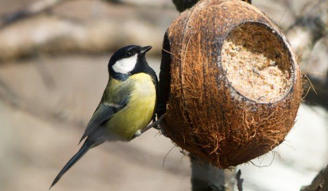8 идей несложных птичьих кормушек