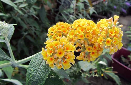 Цветки желто-оранжевые