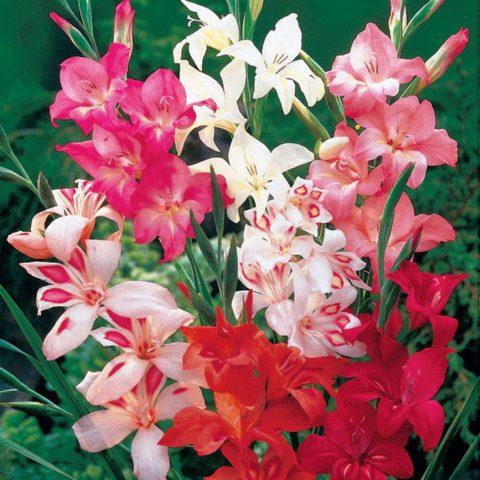 Пастельно-розовые цветки
