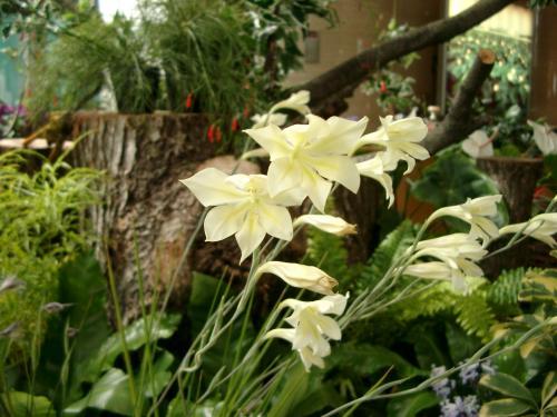 Рыхлые колосовидные соцветия