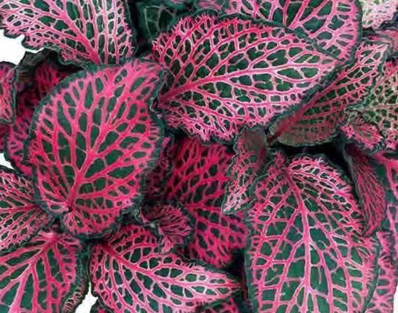 Разнообразные листья
