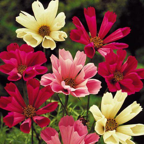 Различные оттенки цветков