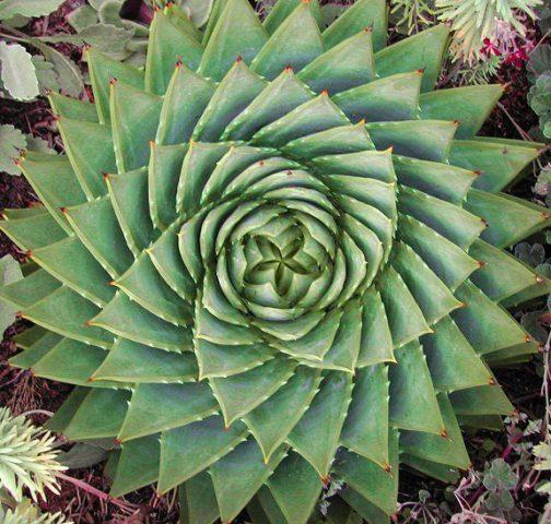 Красивое растение