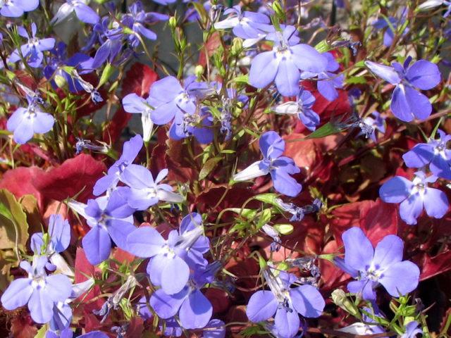Нежные цветки