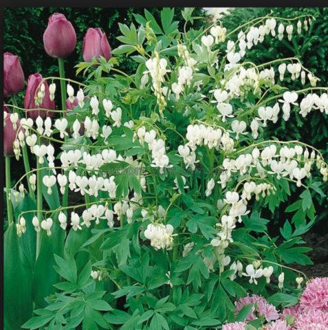 Интересная форма с чисто-белыми цветками