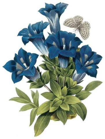 Цветки фиолетово-синего цвета