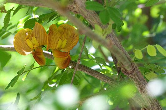 Цветки медной окраски