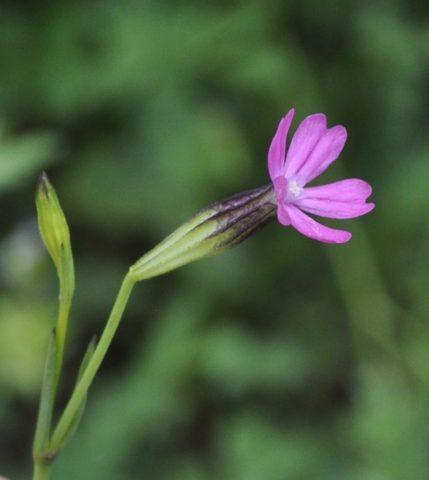 Цветки мелкие