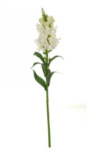 Симметричные цветки