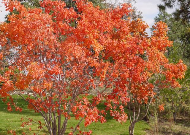 Дерево с яркими листьями