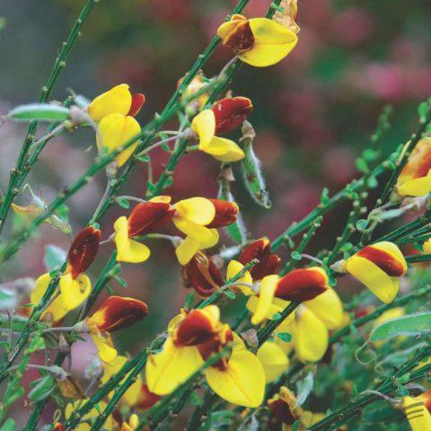 Цветки оранжево-желтые