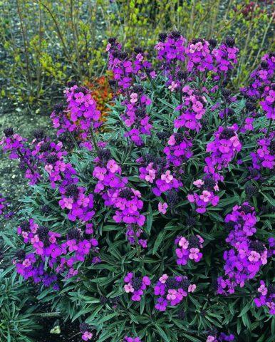 Кустовидное растение
