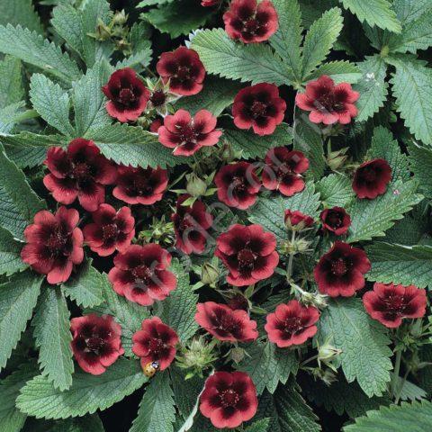 Яркие расцветки