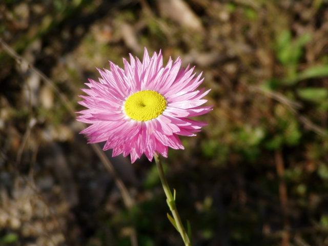 Цветки открытые