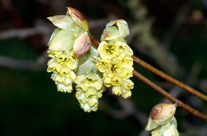 Цветки ярко-желтые