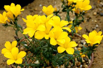 Цветки насыщенного желтого цвета