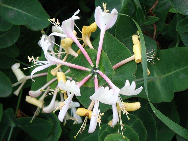 Кремово-белые цветки