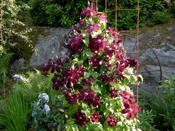 Листочки околоцветника темные фиолетово-голубые
