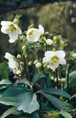 Растения компактные
