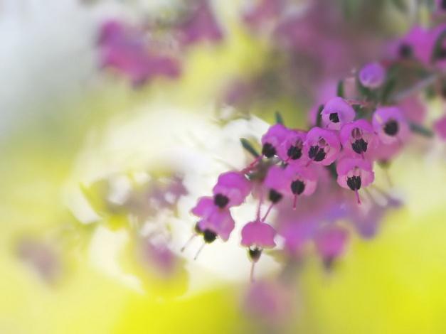 Светлые перламутрово-розовые цветки