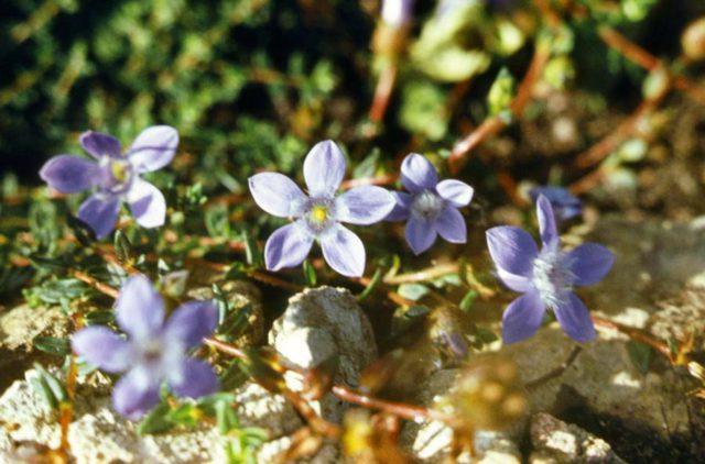 Цветки почти белые
