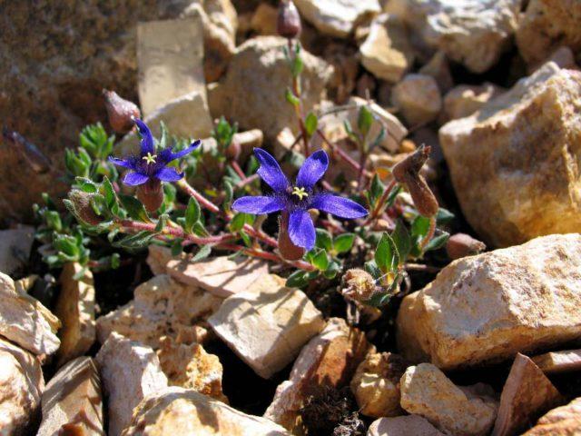 Цветки фиолетово-синие