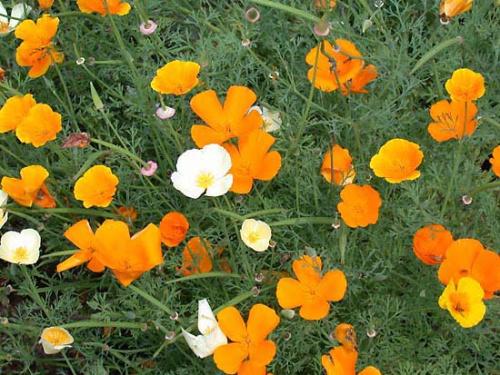 Яркие желтые или оранжевые цветки